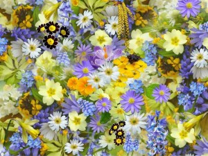 Arathi_Singh_colourful_flowers_ZExhQGZZ.jpg