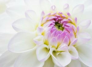 Gunjan_Agrawal_flower_a0dnQWVZ.jpg