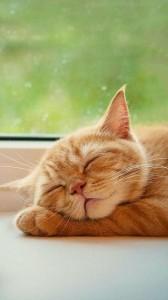 Sridhara_cut_cat_a0ZhRGJd.jpg