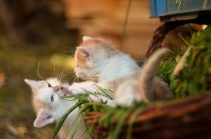 __Saurabh_Arya__cat_YkVhR2Jbcg.jpg