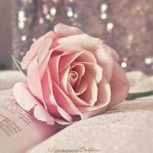 Su_jin_book__rose_ZExiQ2Fb.jpg